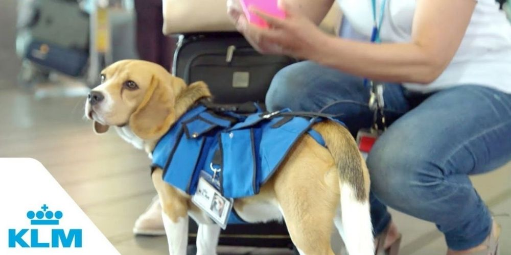 KLM-Pet-Policy
