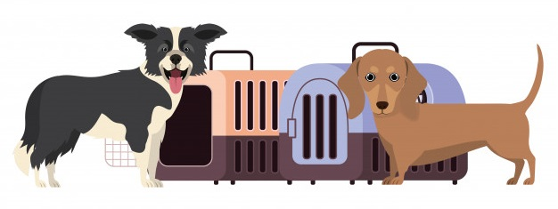 Frontier Airlines' pet policy